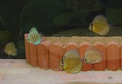 s-fish.jpg